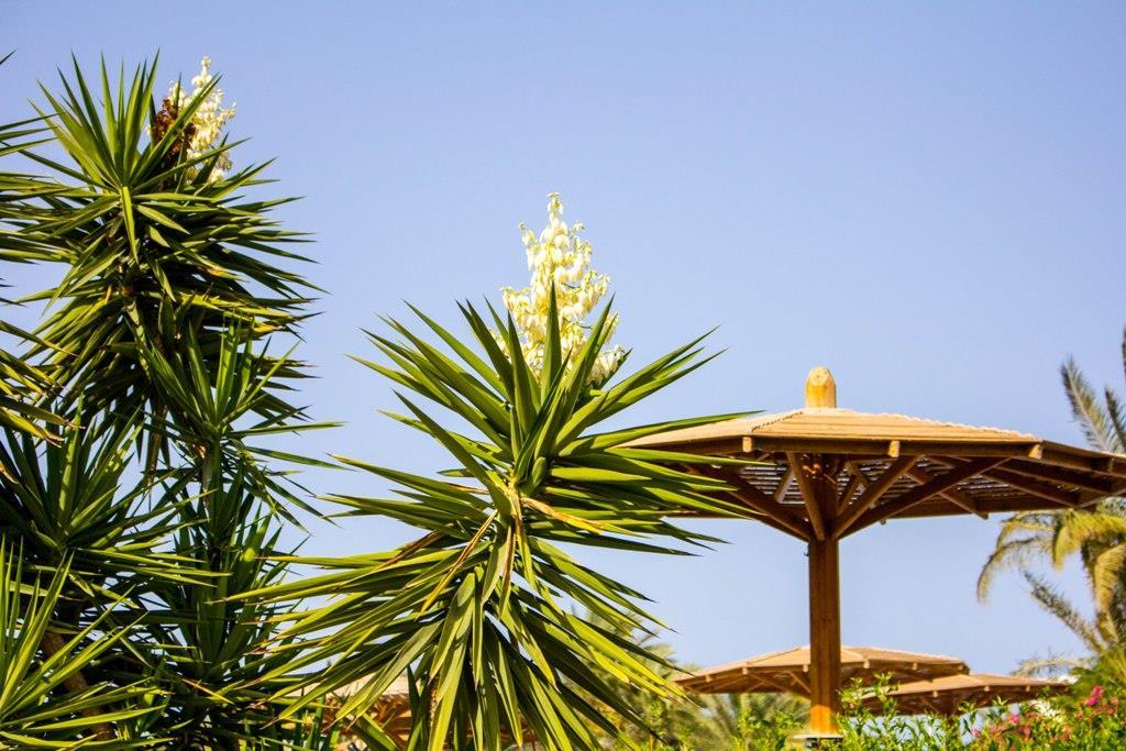 golden-beach-resort-general-00141